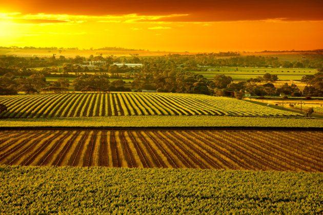 Solnedgång över Barossa Valley i Australien.