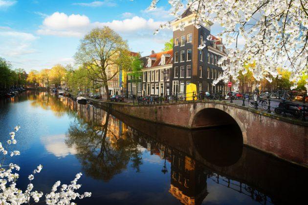 Härlig vårvy över blommande träd och en kanal i Amsterdam, Nederländerna.