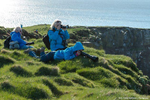 Fågelskådning på Grimsey, Island.