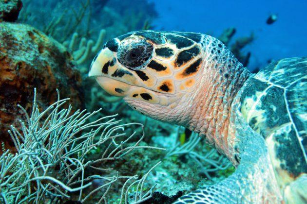 Närbild på ansiktet på en havssköldpadda.