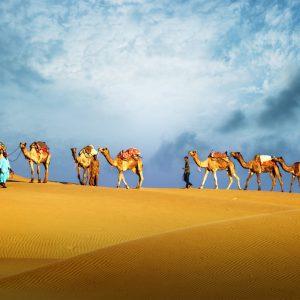 Kameler och dess skötare på vandring i öken i Dubai.