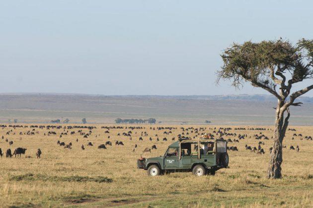 Safari i Masai Mara, Kenya.
