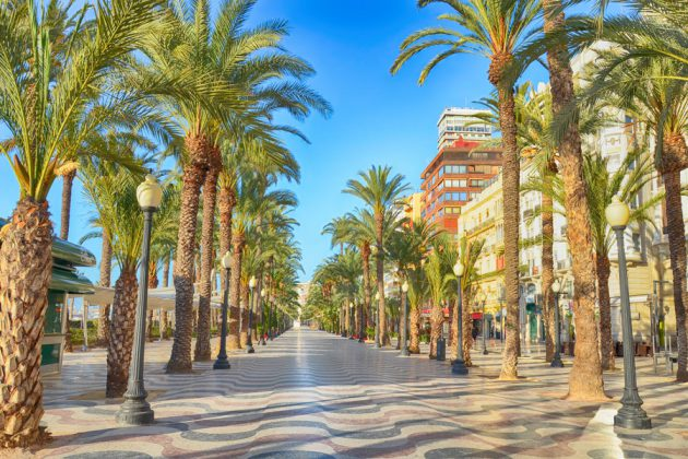 Alicante Alley of Palm trees