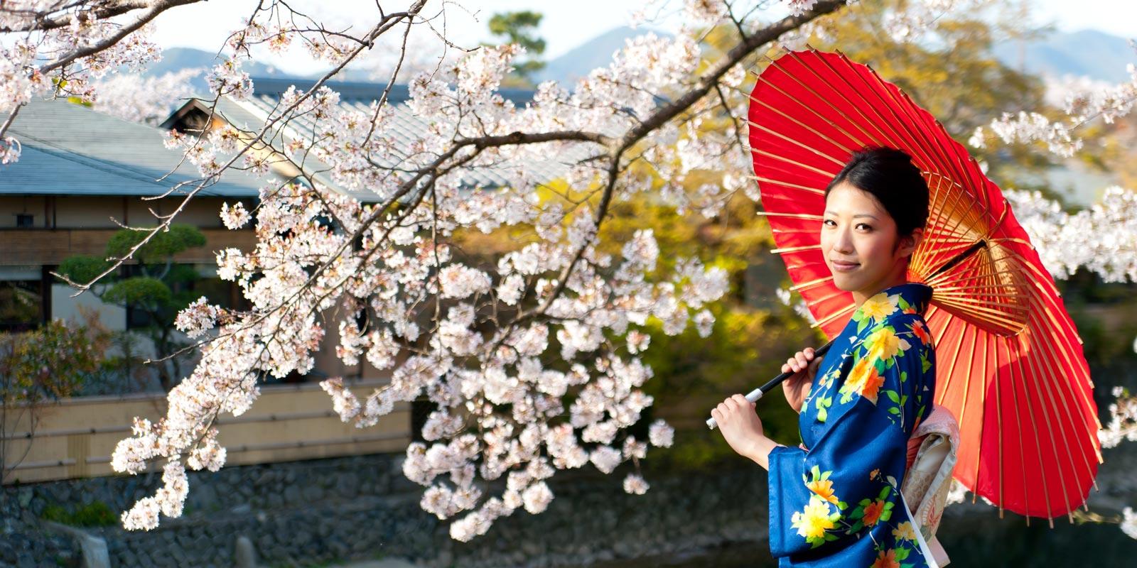 Traditionellt klädd japansk kvinna med rött paraply under körsbärsblom.