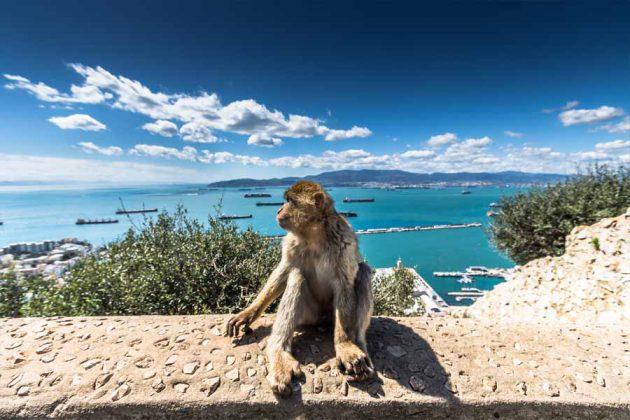 Gibraltar apa